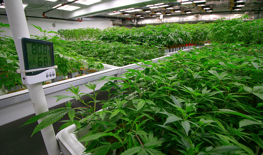 Things To Consider When Pursuing Marijuana Commercial Real Estate CRE Members News